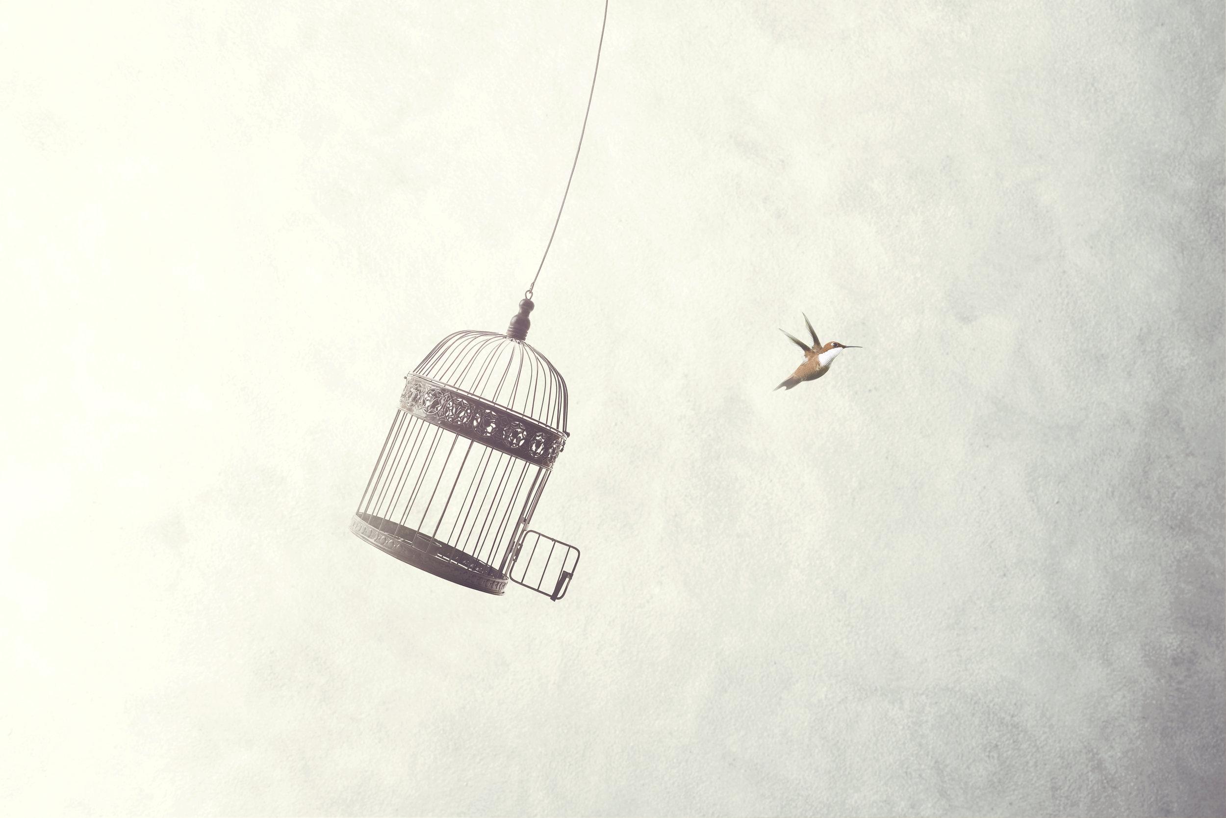 shutterstock_bird.jpg