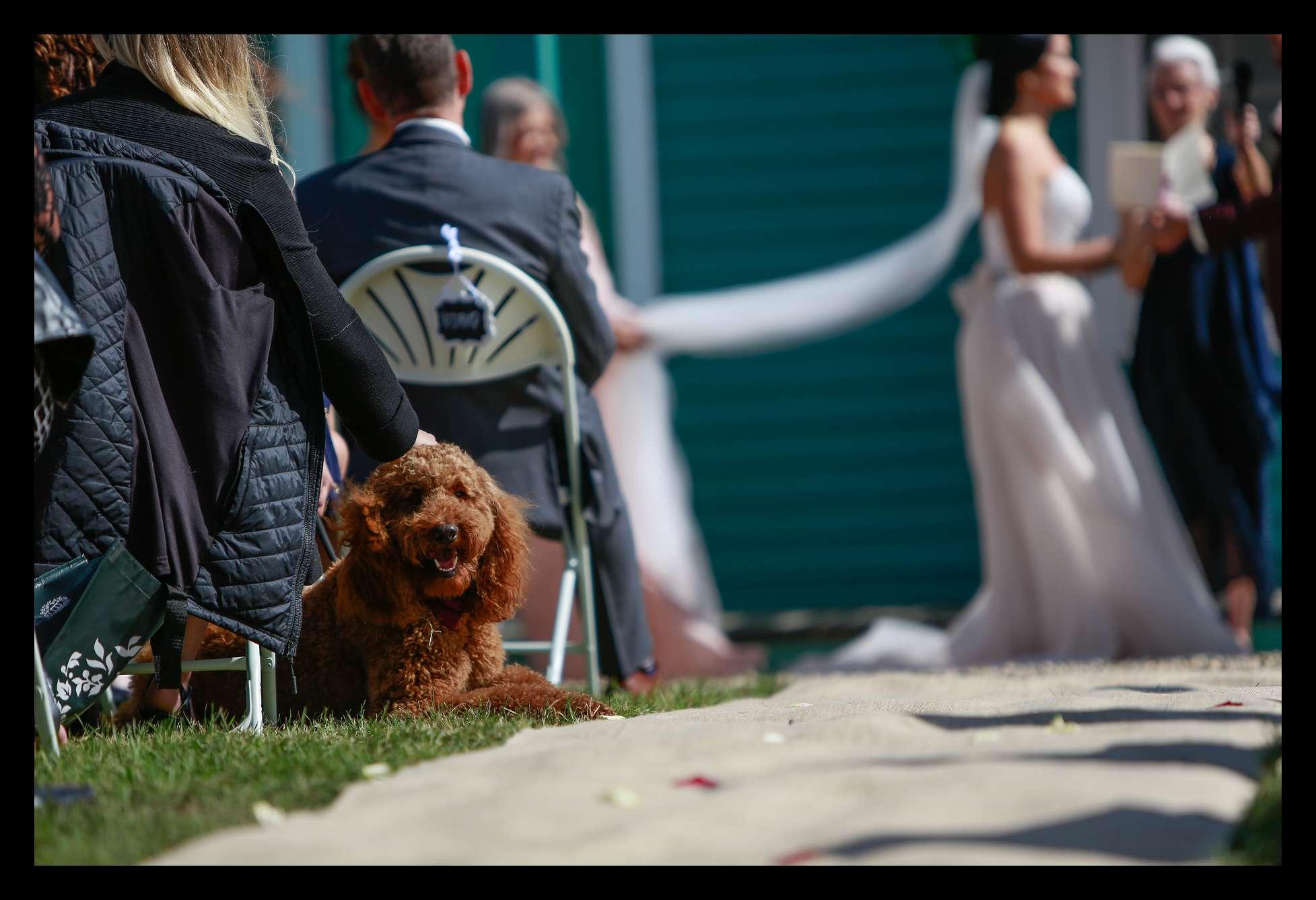 Banff Wedding Photographer Moody_0247.jpg