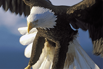 Eagle - You strike me as someone who is very goal & results orientated, who prides themselves on standards.What I would love to do is unpack your behavioural profile that delves deeper – you already know how to get results - but would you like to get results even more efficiently, effectively and faster, sooner, cleaner? So you have even more time to achieve even more cos as you can appreciate, time is precious and it's ticking by so quickly.