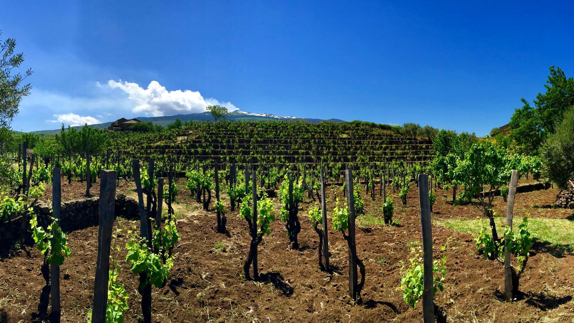 Mount Etna and the vine slopes - Passopisciaro