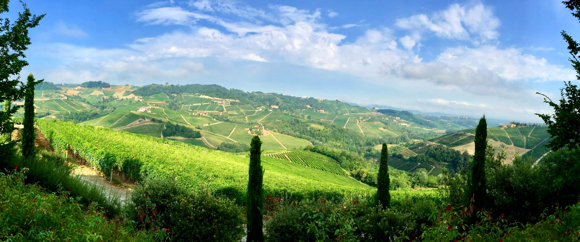 The vineyard landscapes of Langhe & Roero, five distinct winegrowing areas and a castle - Unesco World Heritage Site of Piedmont