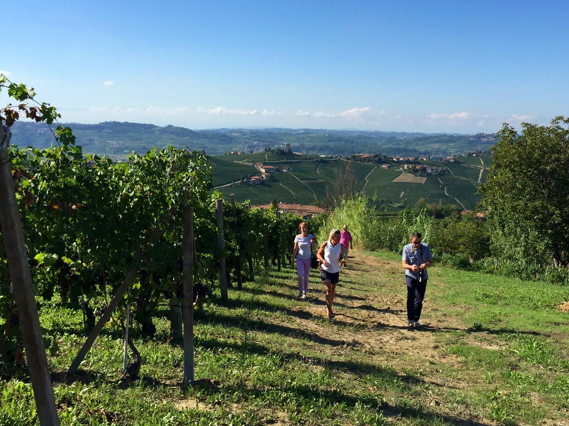 Vineyard slopes in the Barbaresco Appellation - Neive
