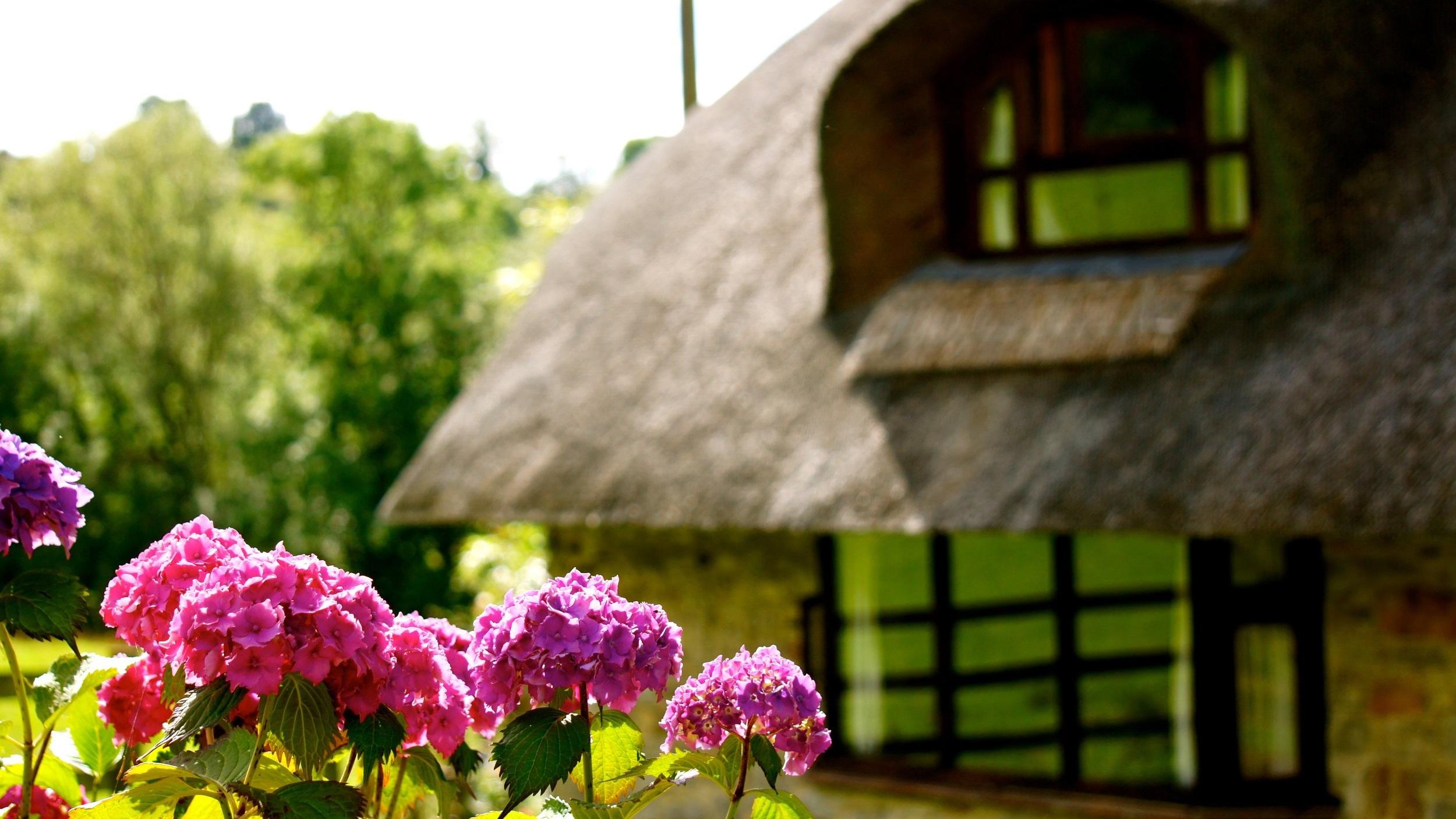 Little Thatch holiday cottage garden