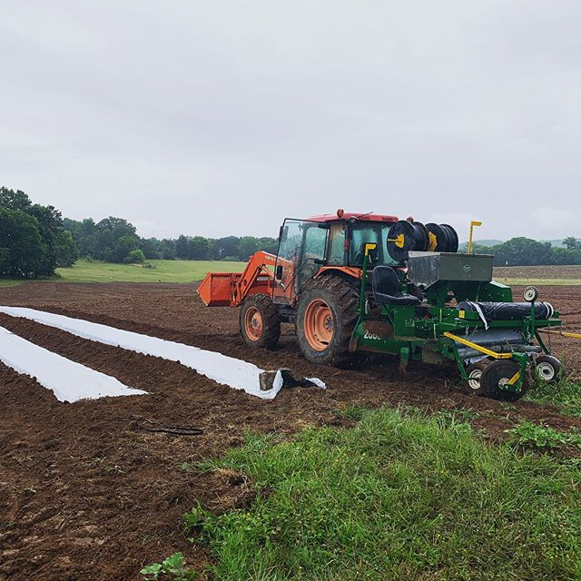 We took a little break over the weekend with the rain, but we're prepped and ready for a busy week of planting!  #haygoodfarms #haygoodhemp #seedtoseal #dirttodelivery #sequatchiesour #ketnerskush #goodforyou #goodfortheearth #tnhemp #oregonhemp #cbd #cannabis #supportlocalfarms #supportlocalfarmers