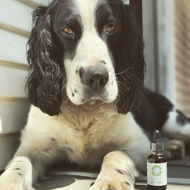 Meet Elmer, our newest brand ambassador for @haygoodfarms and @noogapaws CBD pet tincture. • •  We kept trying to find creative ways to differentiate a Haygood Farms CBD focused pet product, but couldn't find a better solution than to support our local pet store by white labeling a pet product for @noogapaws and @playwashpint • • Their staff is extremely friendly and knowledgeable on the benefits that CBD can bring to our furry friends.  Go check out their incredible products and services @noogapaws and @playwashpint • • #haygoodfarms #haygoodhemp #dirttodelivery #seedtoshelf #noogapaws #playwashpint #supportlocalfarms #supportsmallbusiness #pet #cbd #elmer