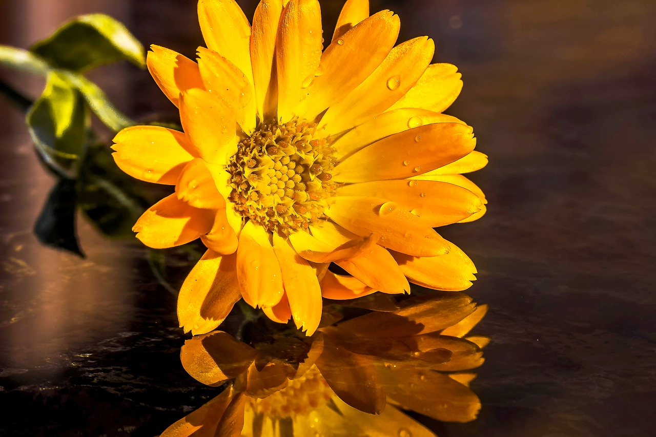 marigold-1731190_1280.jpg