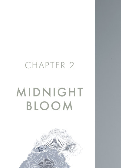 MENG Chapter 2 Midnight Bloom Banner Image