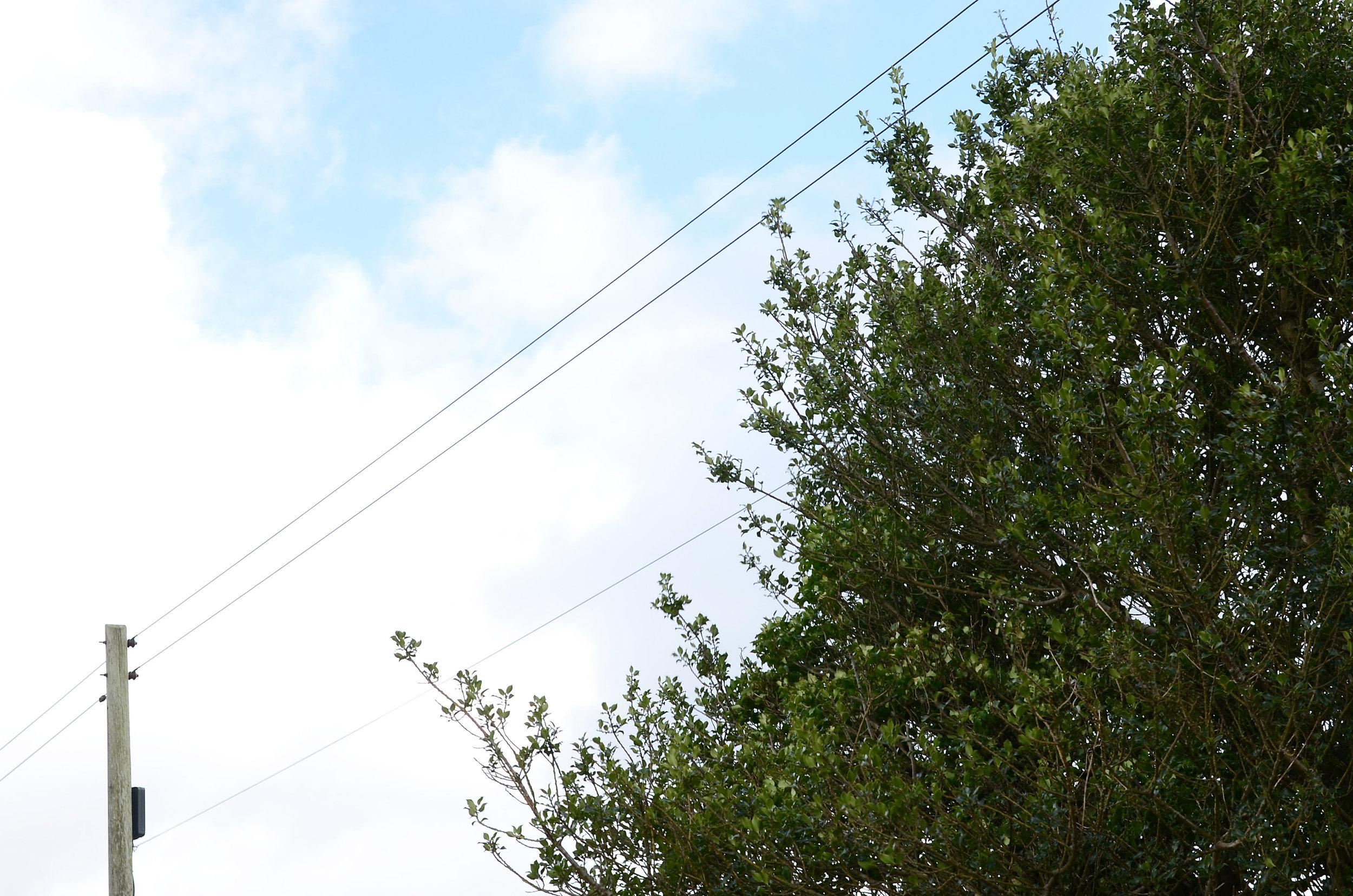 Tree near power line.jpg