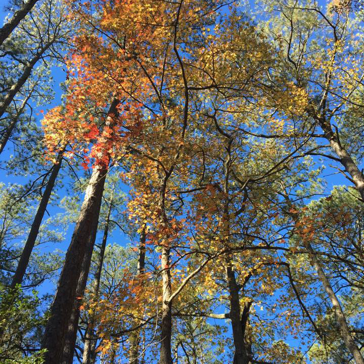 unique - Conservation easements are as individual and varied as the lands they protect. While VES Land Trust has basic terms for all easements, there is flexibility for each landowner's vision.