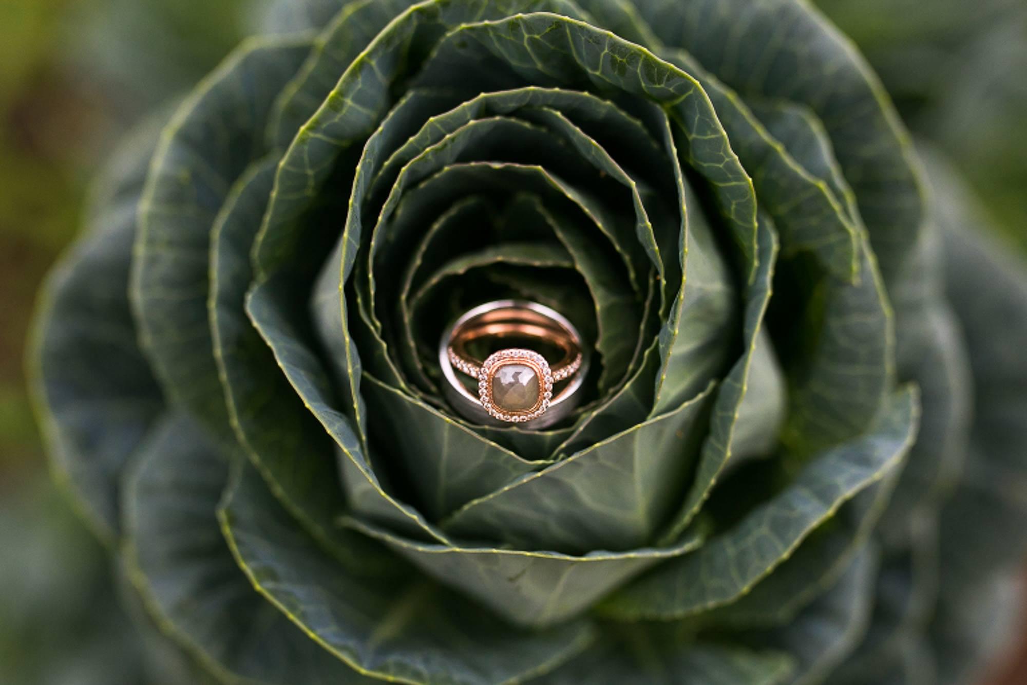 Denver Wedding Photographer Farm Wedding Ring in Plant
