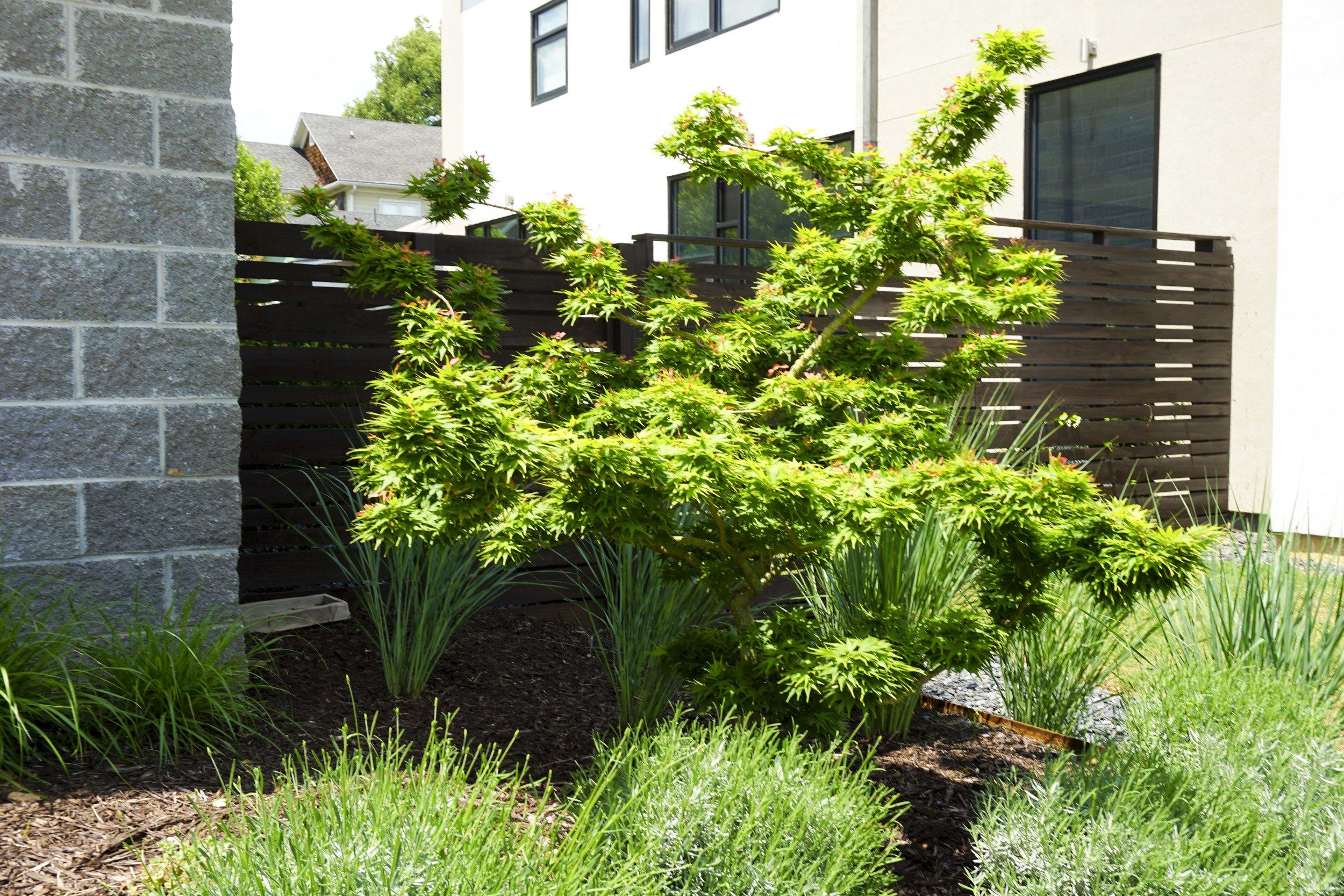 modern-japanese-garden.jpg