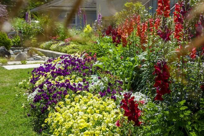 flower-garden.jpg
