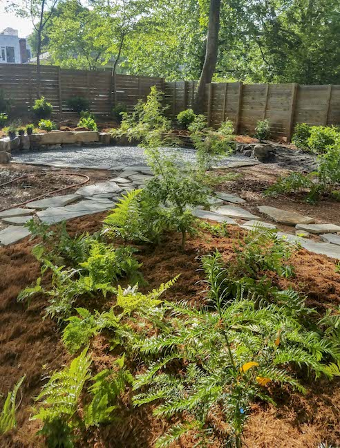 modern-backyard-corten-walls-plants.jpg