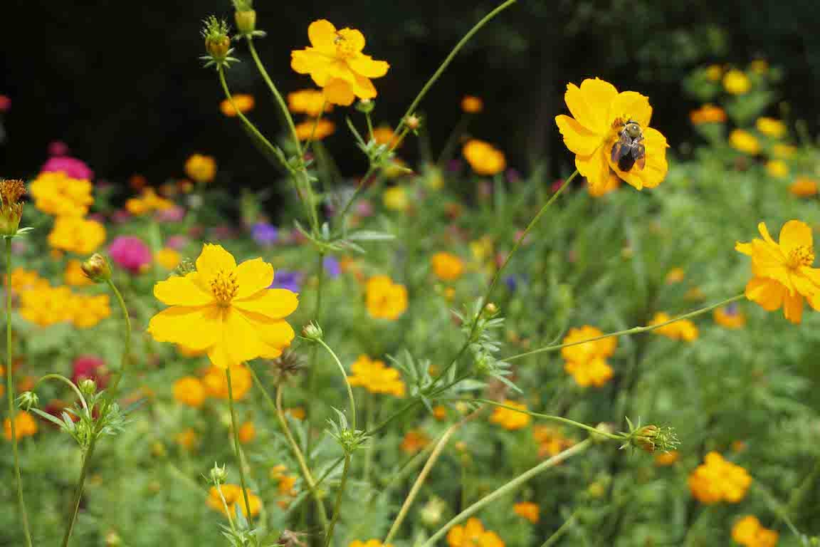 wildflower-bee-garden.jpg