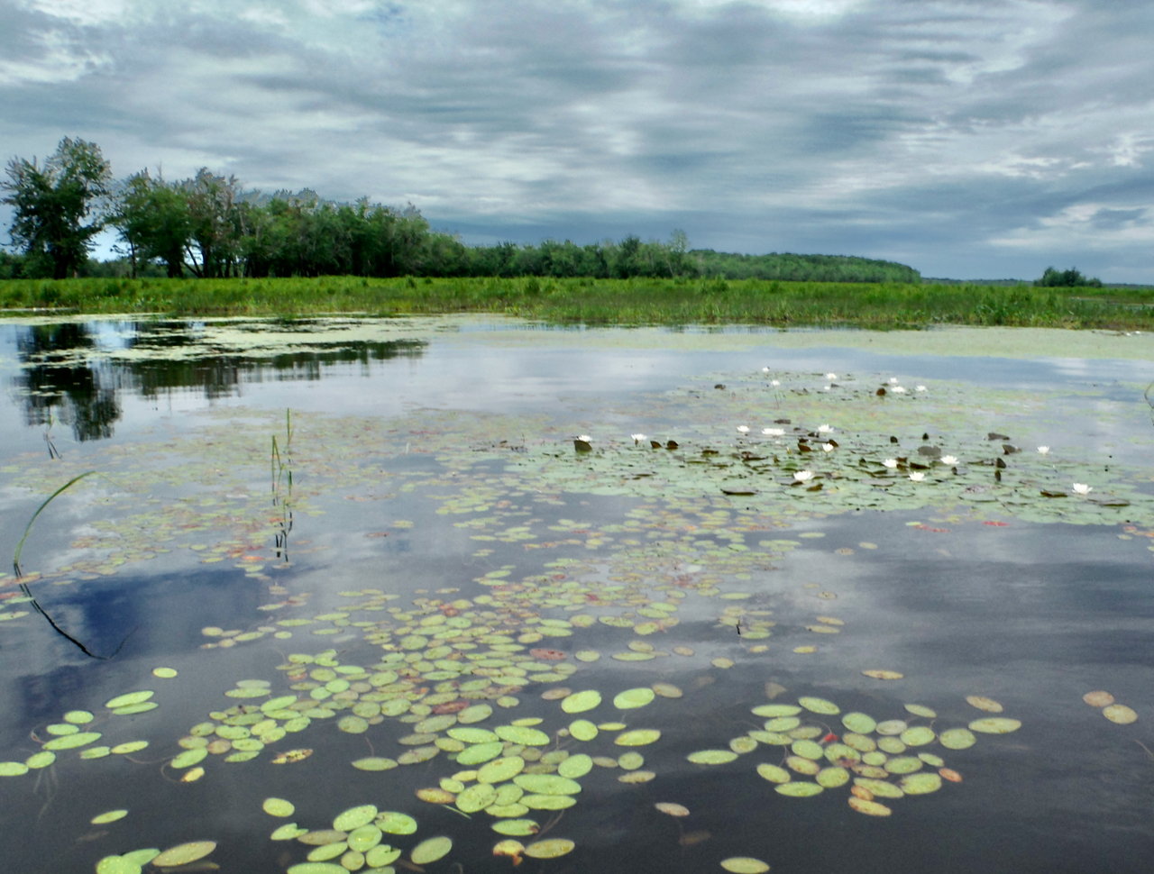 The Saint John river floodplain is one of the few largely intact large river floodplains on either side of the Atlantic Ocean, and is an area rich in biodiversity. (Photo: Natalie Rideout).