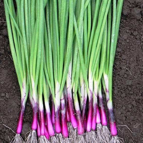 purple scallion.jpg