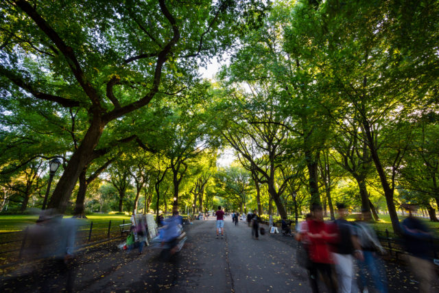 Central Park, New York city the mall trees people