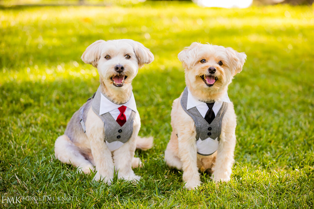 Captain and Butterscotch took a moment to pose in their suits.
