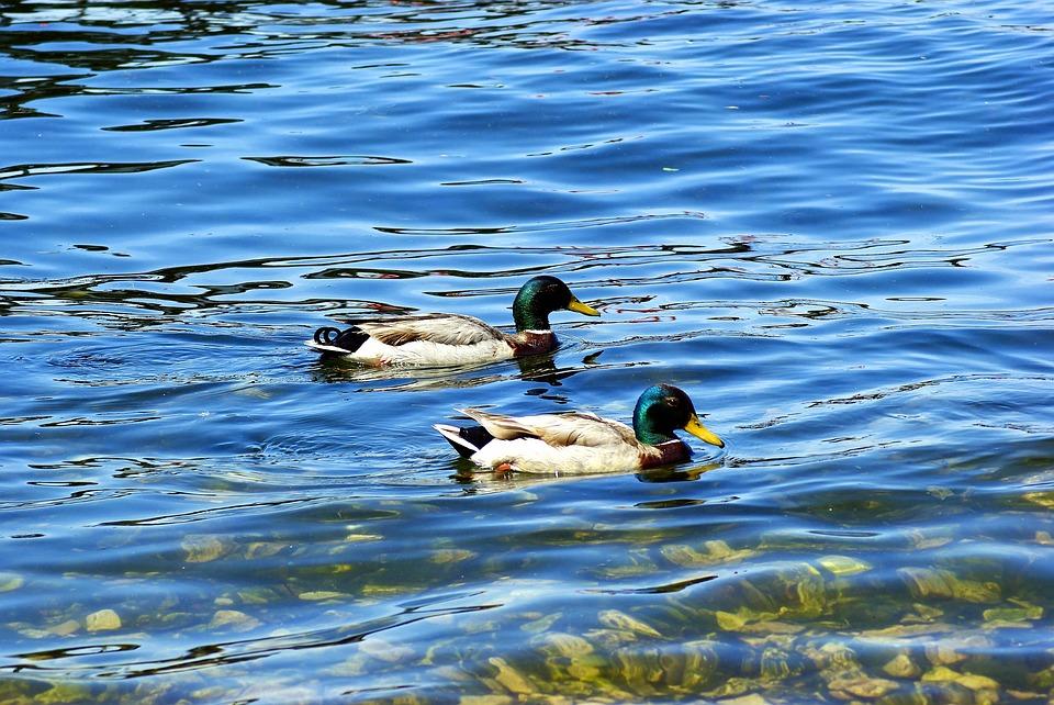 Mendota Water Levels