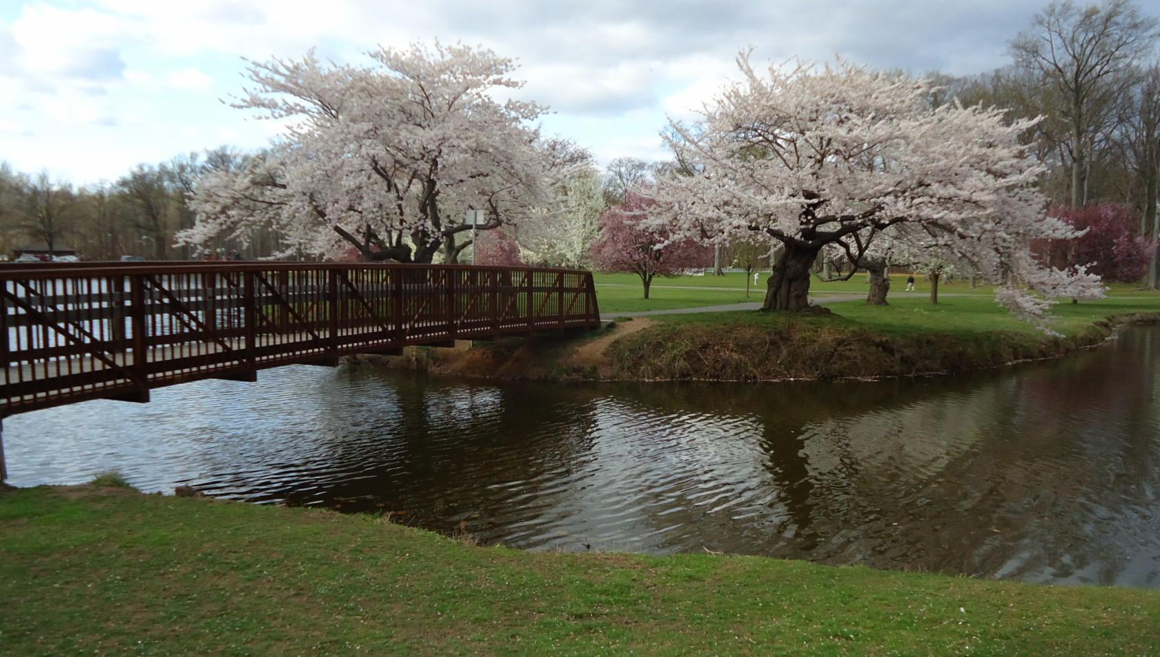 Bridge_and_trees_near_lake_in_Nomahegan_Park_NJ.jpg