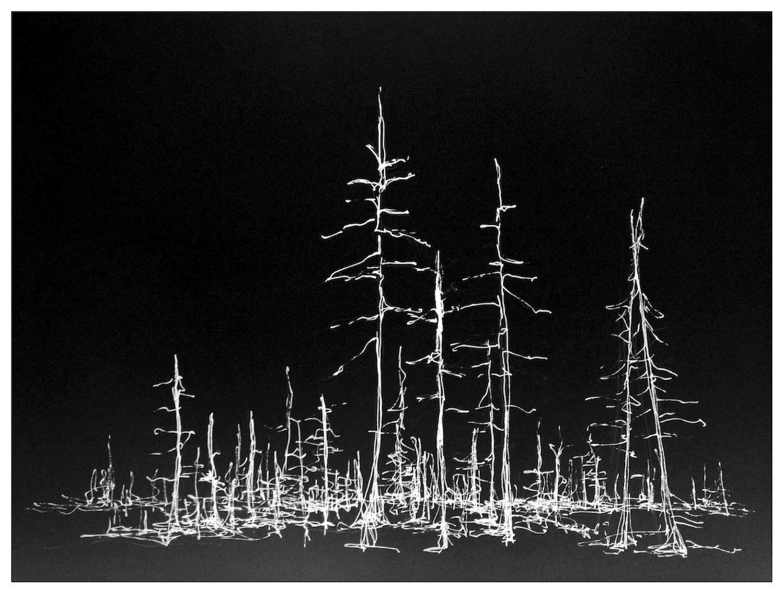 Cinders/Trees, Oregon 1