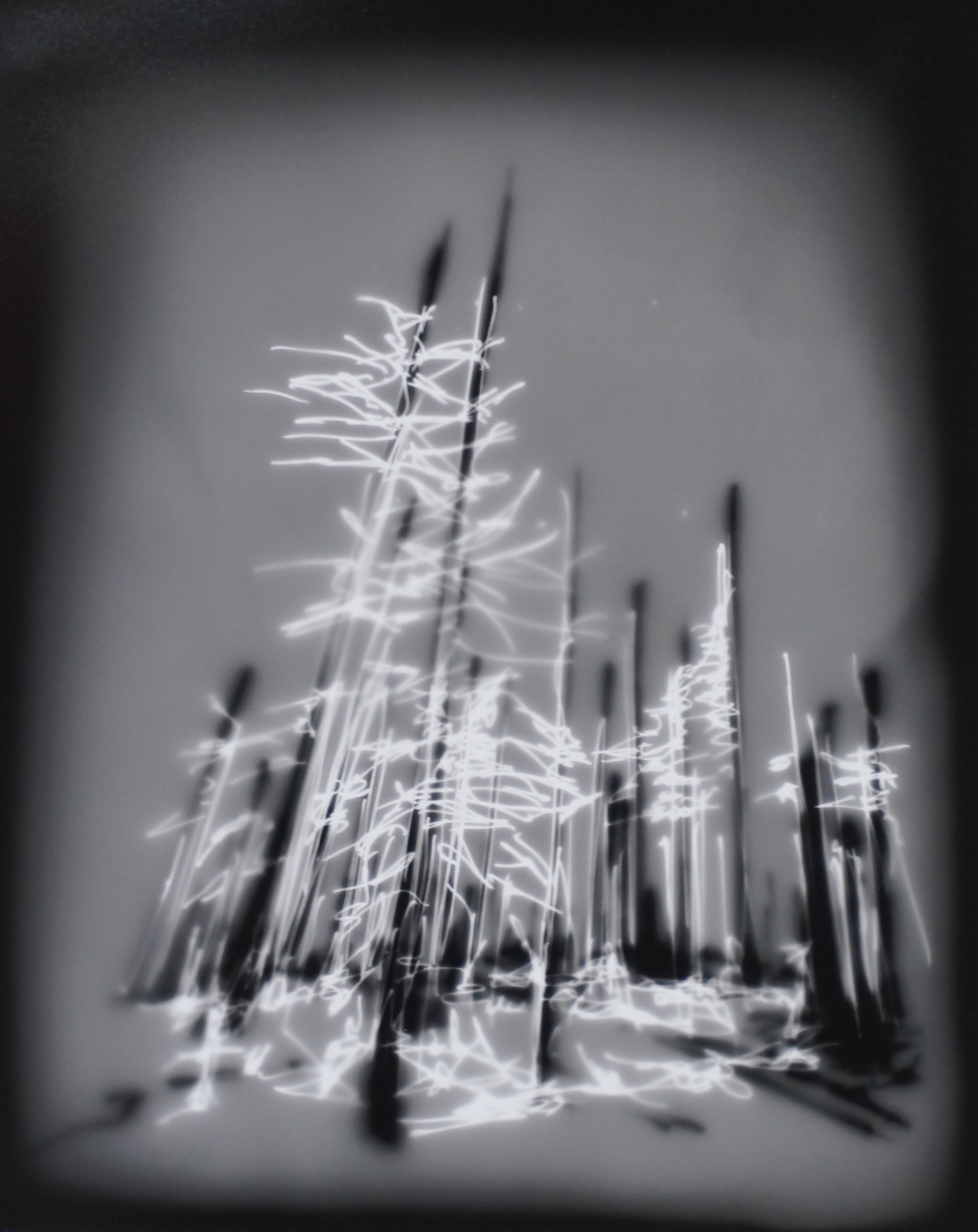 Helen Dennis   Trees, Oregon #1   2013  Photographic drawing  Signed by the artist,  verso   Image/sheet: 10 x 8 inches  Framed: 14 x 11 inches