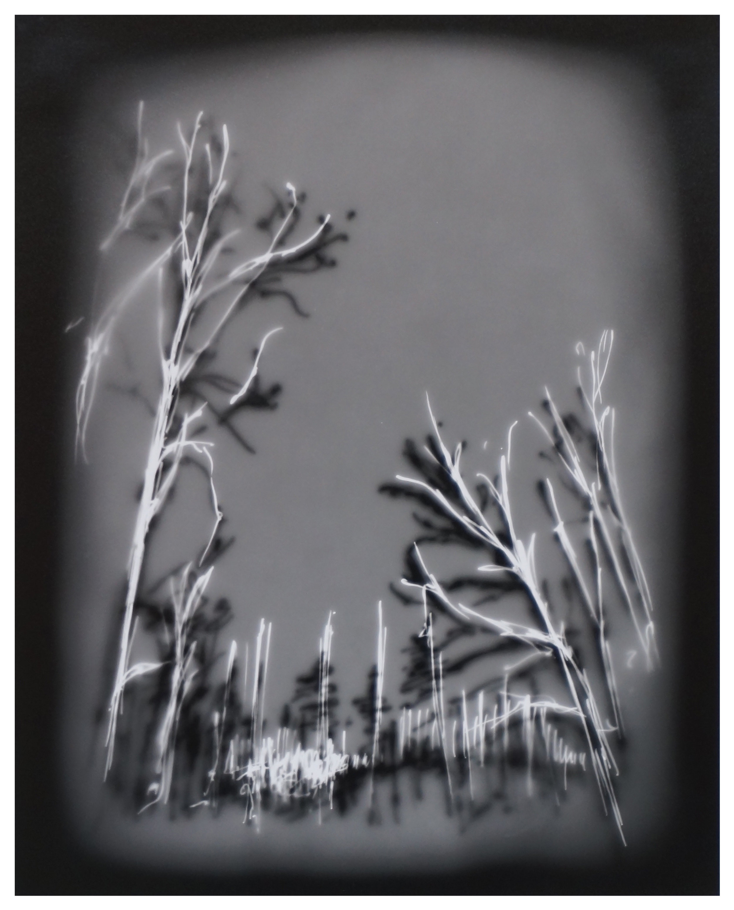 Helen Dennis   Trees, Oregon #2   2013  Photographic drawing  Signed by the artist,  verso   Image/sheet: 10 x 8 inches  Framed: 14 x 11 inches