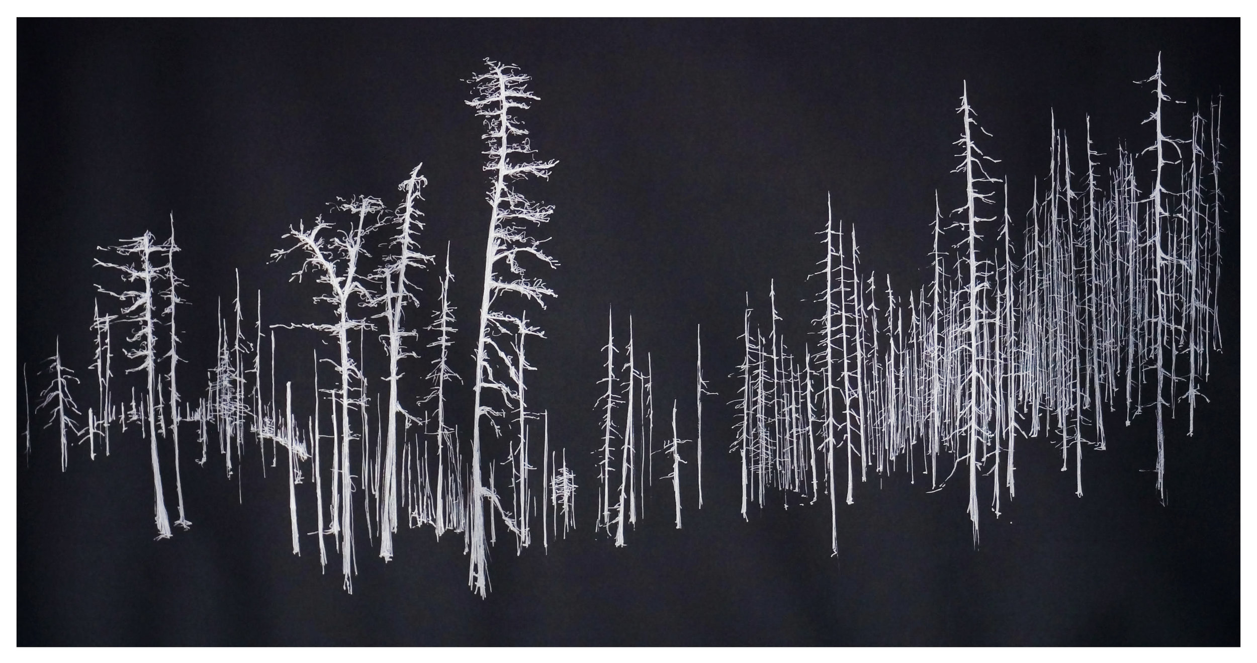 Helen Dennis   Sea of Trees   2019  Silver pen on grey paper  Signed by the artist in pencil, lower right  30 x 60 inches
