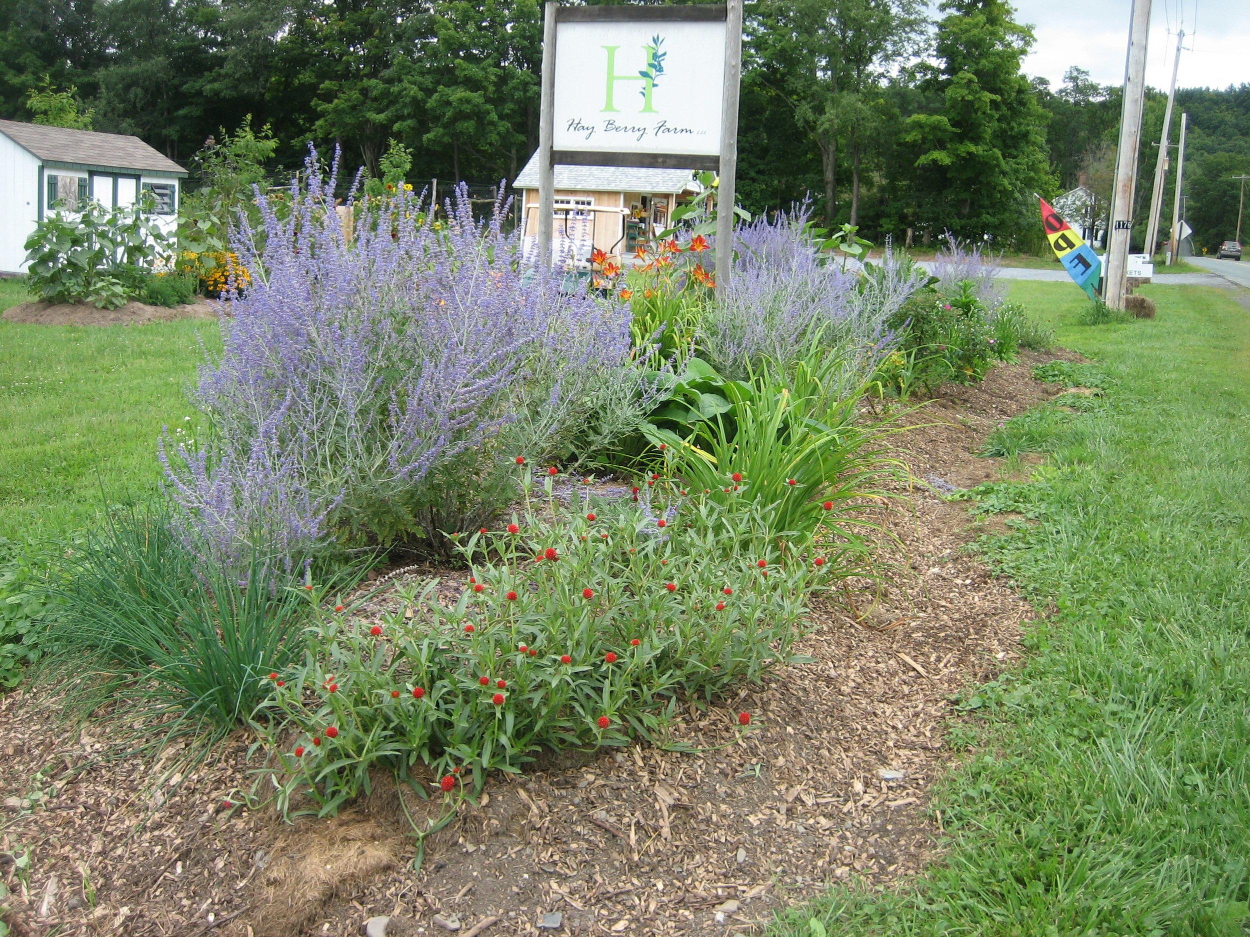 Hayberry Farm -