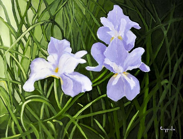 Susan's Irises