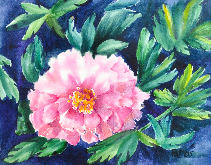 Thomaston Peonies