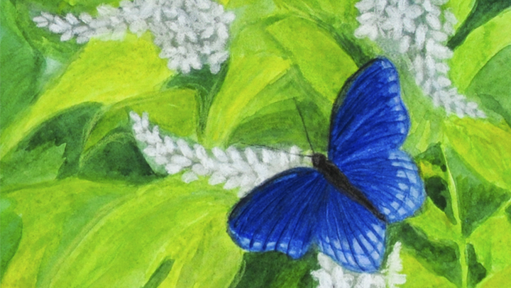 """""""Blue Butterfly"""" detail of pastel painting by Patty MacIver"""
