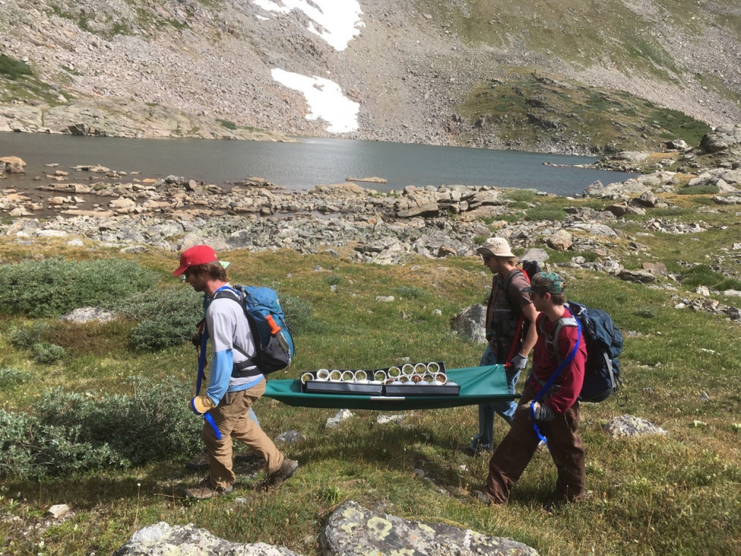 Our team of strong ecologists carrying up the transplants on a stretcher! Photo by Jane G. Smith.