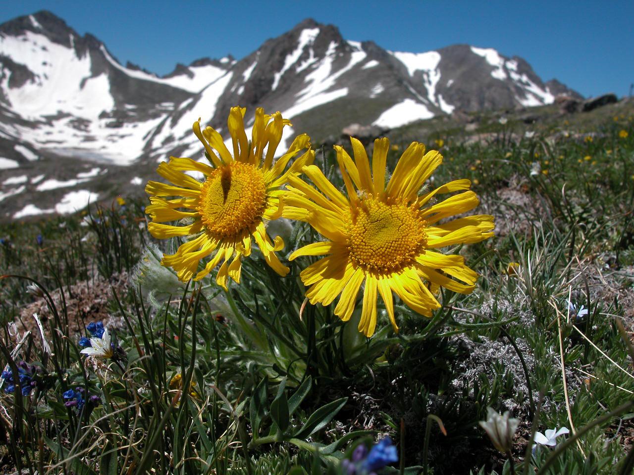 Alpine Tundra (photo: W. Bowman)