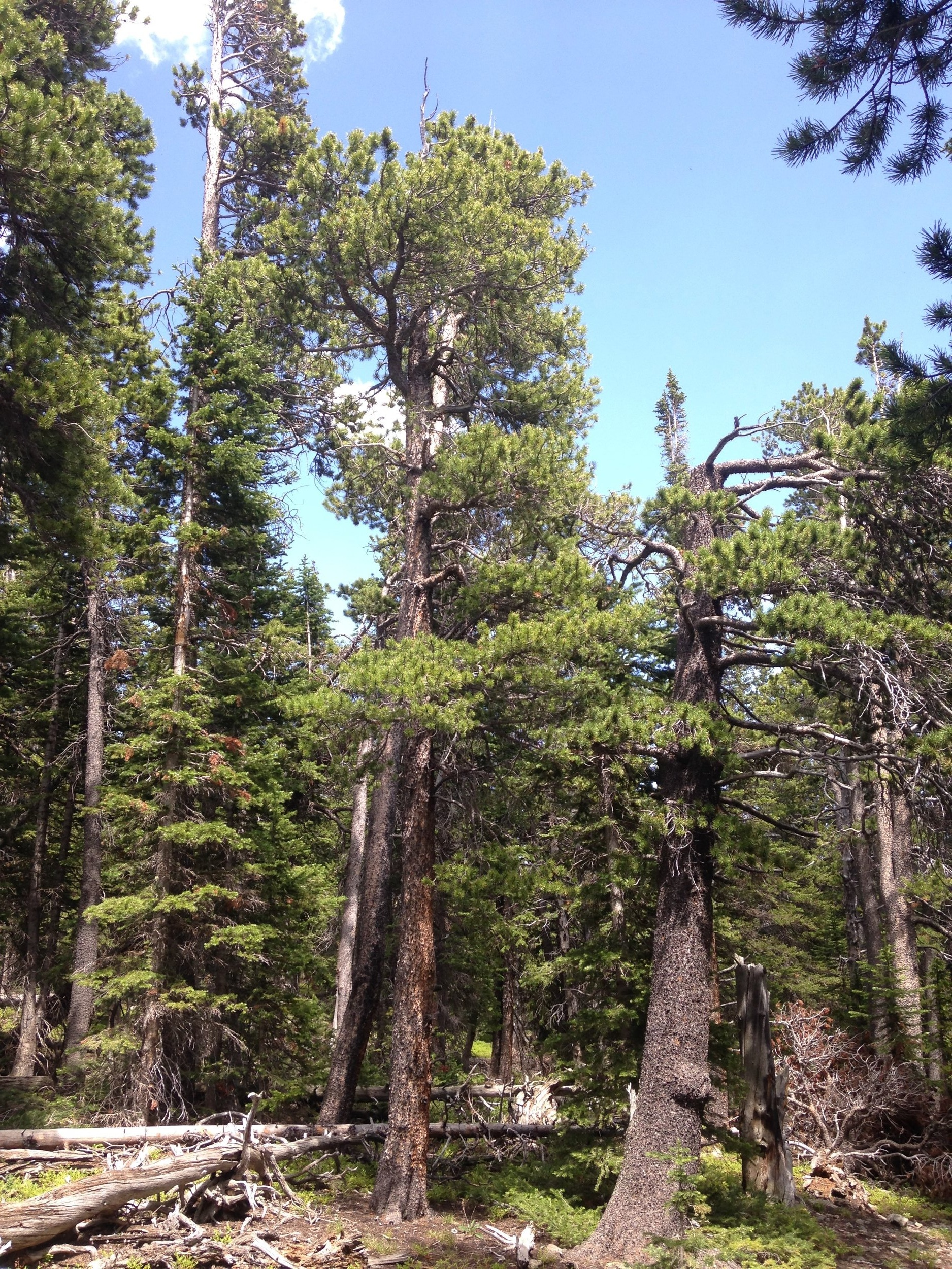 Photo of forest plots by R. Andrus