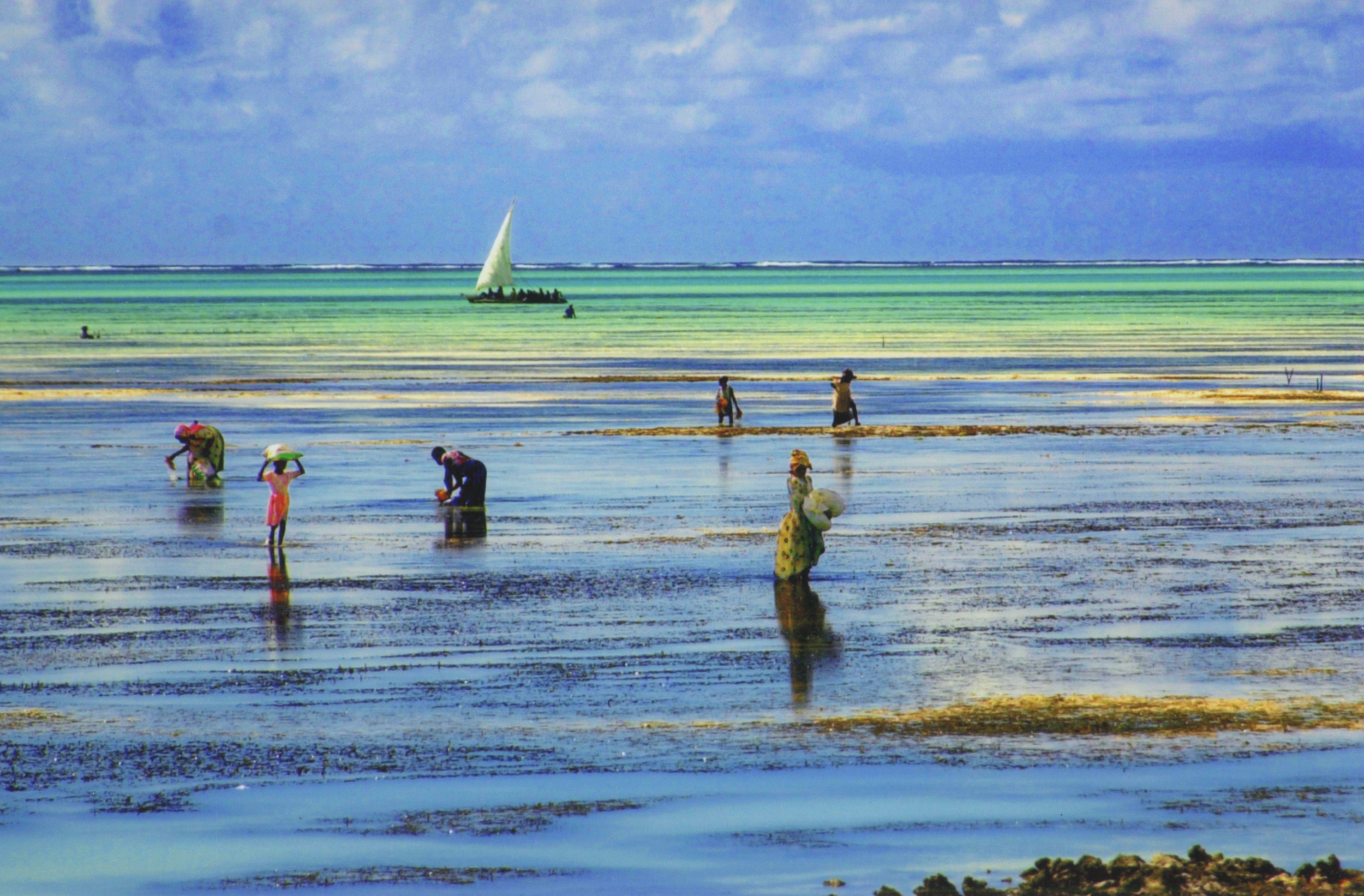 On Zanzibar island, NOMAD CHIC, sailed on a local dhow to a sea-weed farm organized by a woman's cooperative.