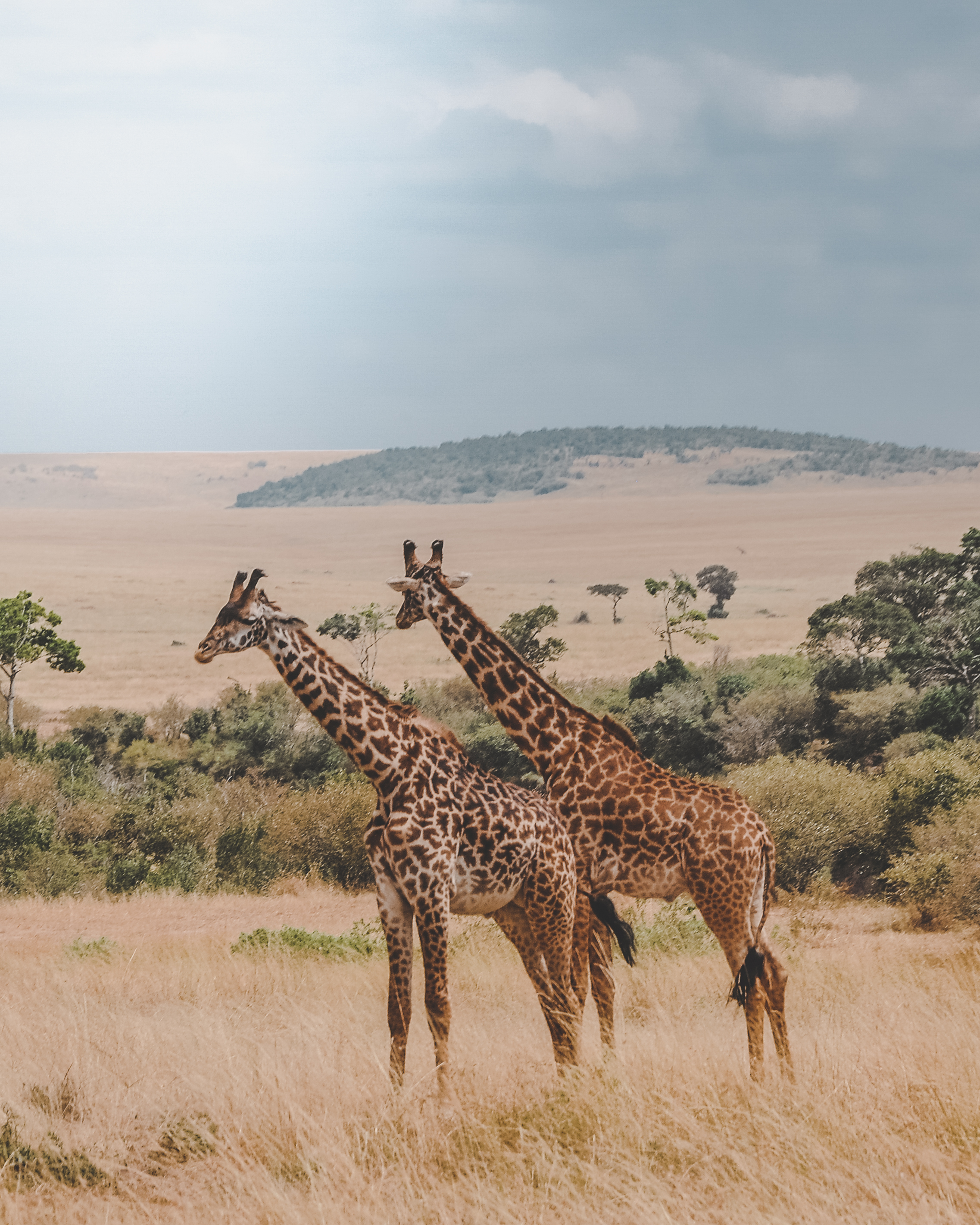 A travel day on safari is always a 'game drive'.