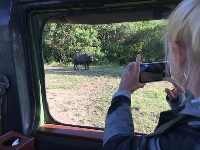 Everyone wildlife sighting is monumental.