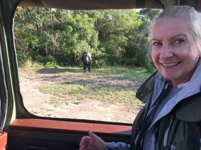 Wildlife is habituated to the vehicles…