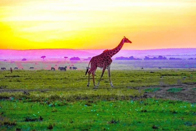 … then choose a game drive (or not)…