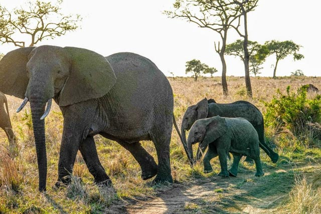 Elephants have the right of way!