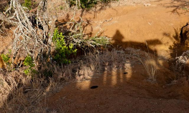 After lunch and siesta, you head out for the afternoon game drive.