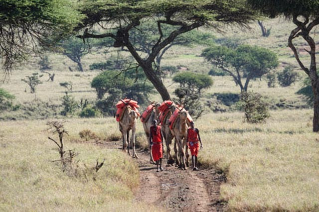 Approaching is another Lewa exclusive…