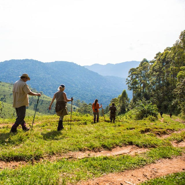 Then, it's off to Bwindi forest…