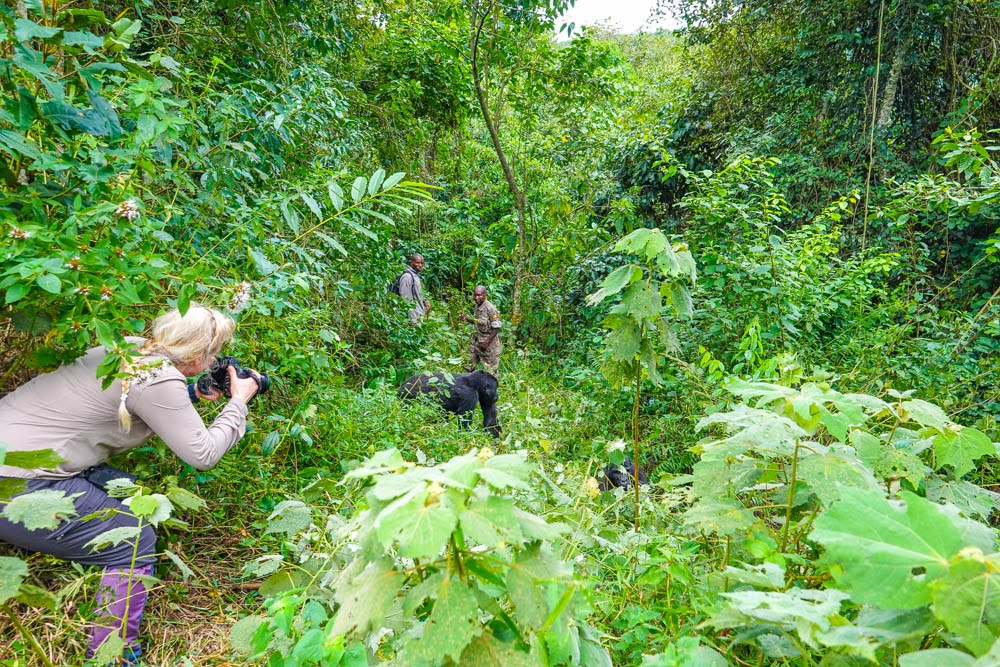 African Great Explorations Safaris delivered my dream - a Gorilla-Trekking Trip in Uganda.