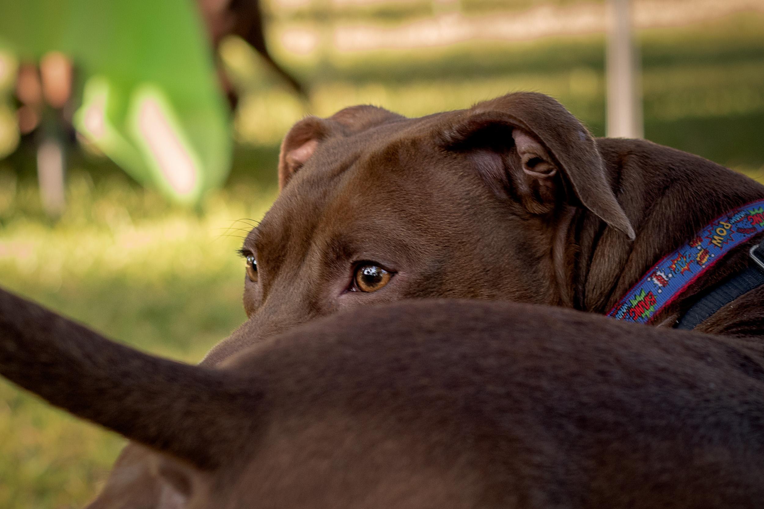 Rescue dog profile - M's Animals Photography