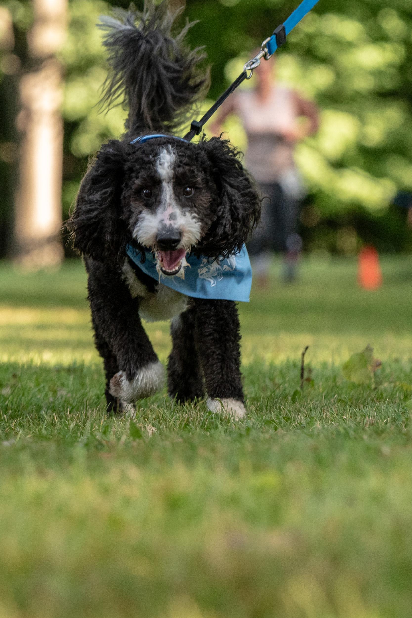 Dog run - M's Animals Photography