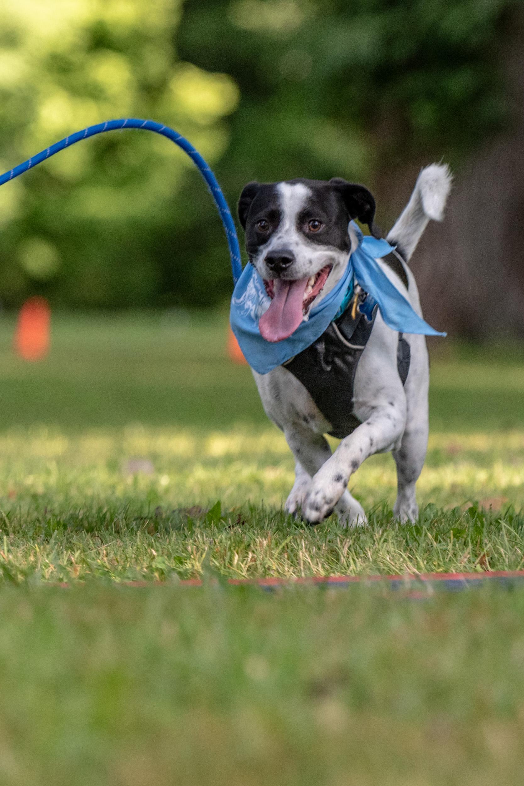 happy dog run - M's Animals Photography