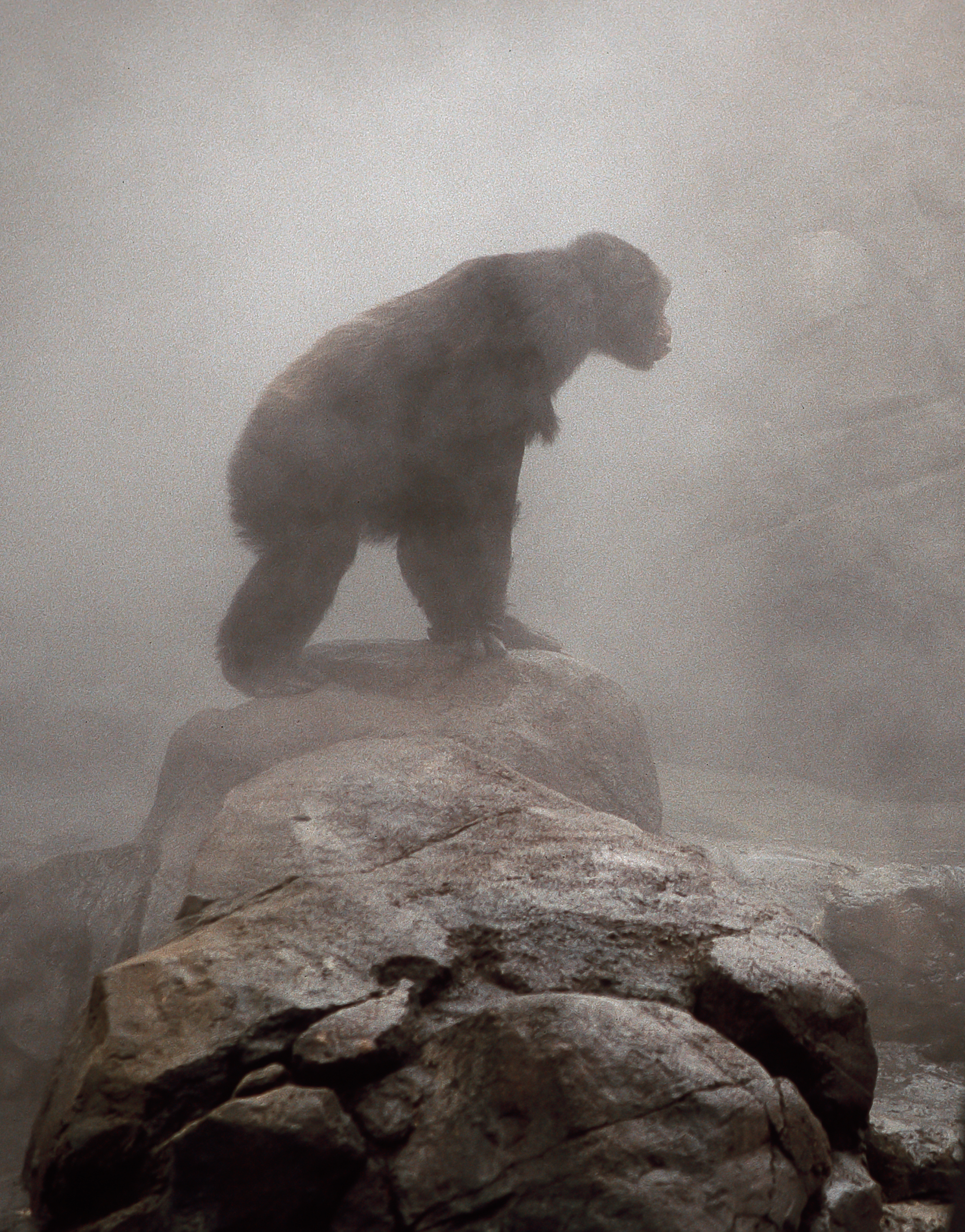 Chimp in the mist.jpg