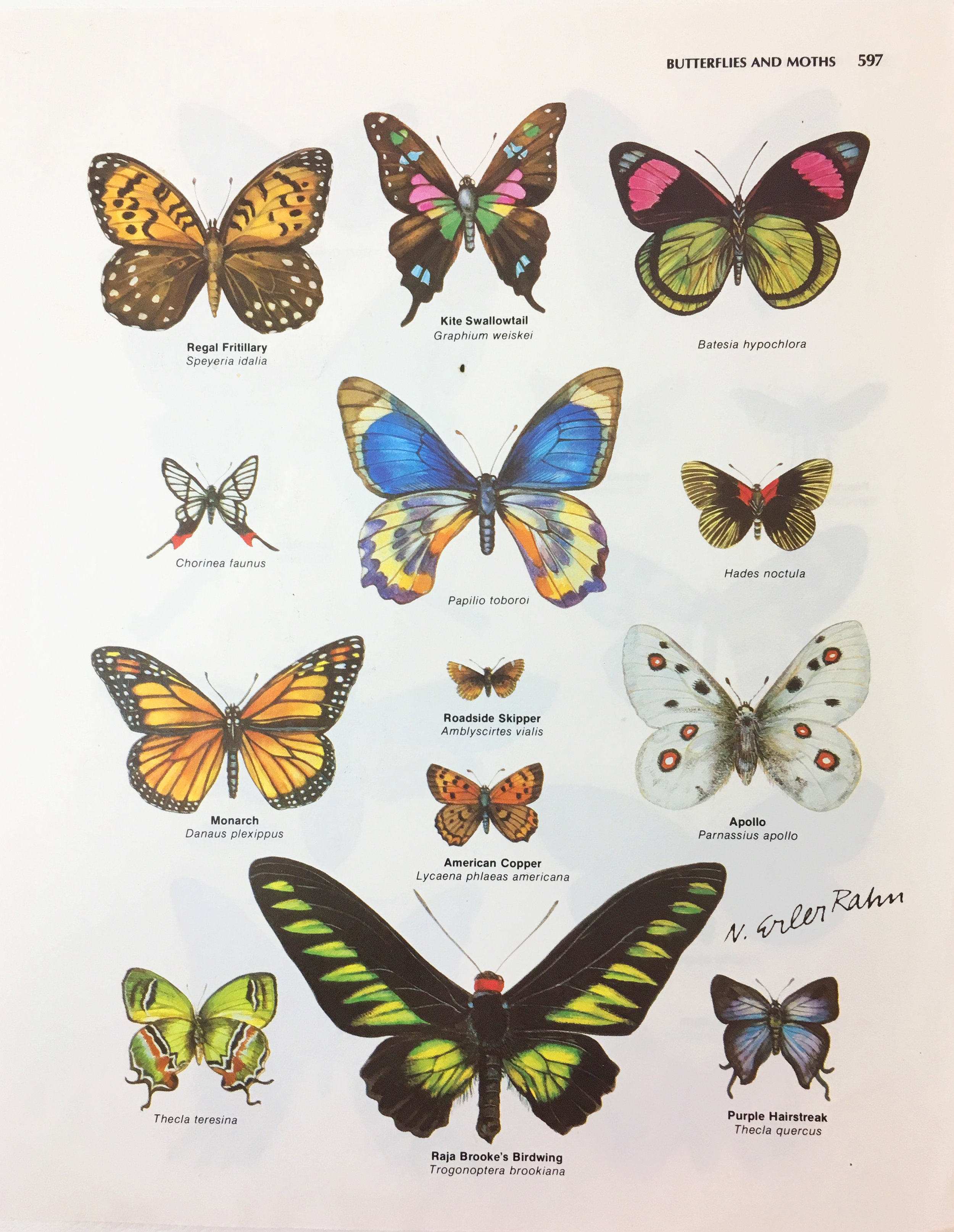 Butterfly Watercolor for Arete Encyclopedia